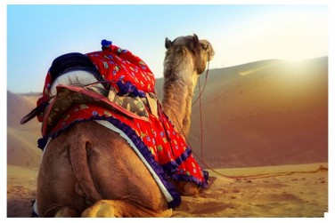 Get the Glimpses of Pushkar Camel Fair 2018